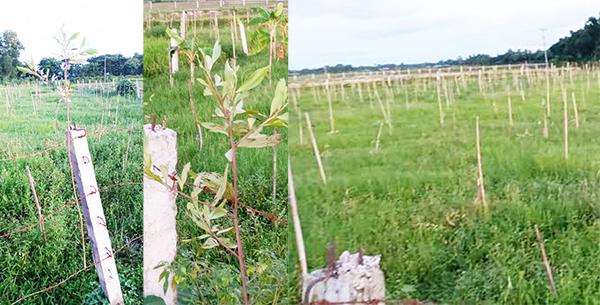 আখাউড়ায় গভীর রাতে বাগানের সহস্রাধিক বৃক্ষকেটে নষ্ট করলোদূর্বৃত্তরা
