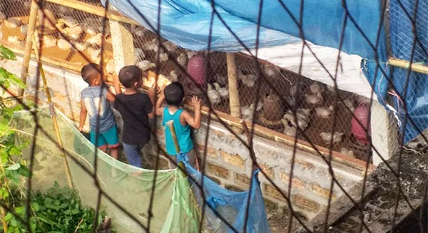 কুলাউড়ায় অপরিকল্পিত পোল্ট্রি ফার্ম ঃ শুনানীতে হাজির হননি বিবাদী