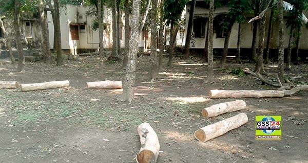 ব্রাহ্মণবাড়িয়া আখাউড়ায় অনুমোদন ছাড়াই কর্তন করা হলো স্বাস্থ্য কমপ্লেক্সের গাছ