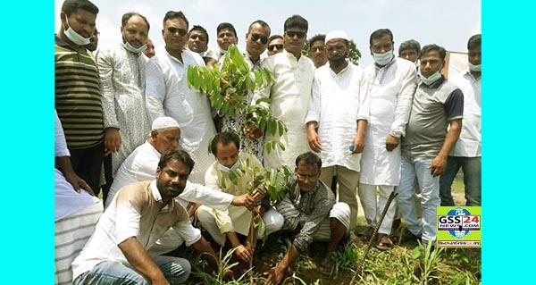সিরাজগঞ্জে বিএনপির বৃক্ষ রোপন